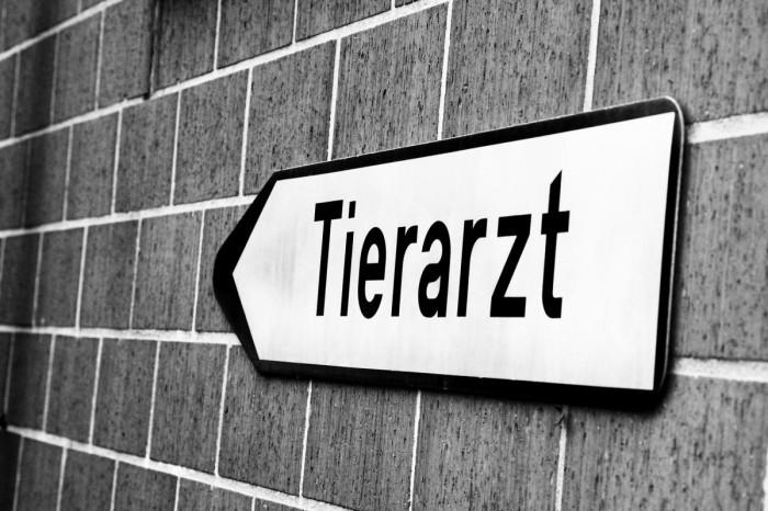 tierarzt_020